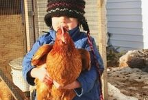 Backyard Chickens / Did you know that some food pantries can accept fresh eggs from your backyard chicken flock? If you have extra eggs to donate, visit AmpleHarvest.org to find out where to donate near you.