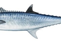 Fish I've Caught / by Jason Schmidt