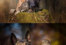 PHOTOS ANIMALIERES