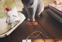 Mascotas Paper Lover / Todas nuestras mascotas y las de nuestros clientes