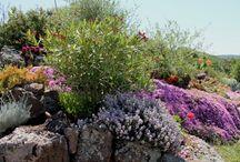 Giardini splendidi / piante e fiori
