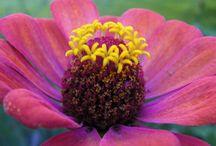 Flowerpoint fotos.