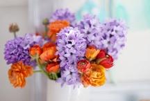Garden - Flowers / by Sabor