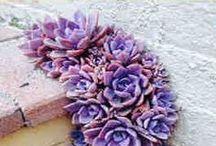 flores de color