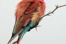 ~HUMMINGBIRDS~ / by Maria Greszczuk