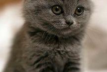 Imádnivaló kiscicák