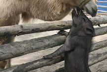 Bautifull Animals