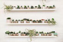 Botanical Minimalism