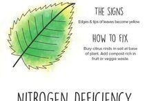 Santé des plantes