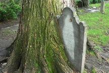 "Trees,plus......""of interest"""