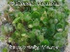 Algae / by Clara A