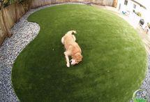 Landscape / Dog friendly landscapes