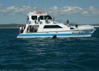 Whale watching / Random photos and news about whale watching from the Home of the Humpbacks - Hervey Bay!