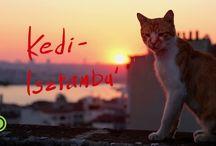 Kedi -Isztambul macskái - feliratos előzetes