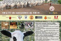 Feria Ganadera-Calasparra