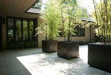 Garten Bambus