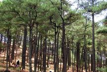 Beautiful Baguio City / There's more to Baguio than just SM. :P