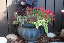 FLOWER power for outdoors / FUNtastic ideas to beautify your yard!