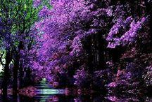 Nature Images / Pinterest board from Smart Creative Style Class
