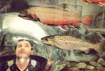 L.L.Bean Freeport Fish Tank / We're all in a bubble.