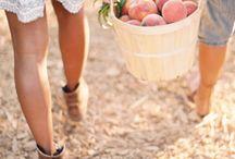 Sweet Georgia Peach / by Jeanette Delia