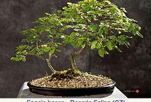 Idee per la casa / Giardinaggio bonsai