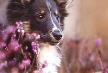Animais: Cães