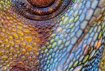The Amazing World of Reptiles