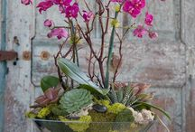 Orchids in Bowls
