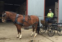 Horses, Carriage Driving & all things equine