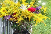 Edies paradise / Beautiful plants / by Edie Biney