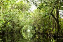 Guyane / L'Amazonie française!
