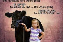4-H, Cattle & Life / by Cheryl Hinrichs