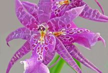 Enchanting Orchids