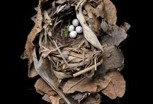 Bird Nests / Bird nests, so glorious, such natural and most beautiful of wonders of the world! I used to collect bird nests, I may start collecting them again! Amazing world we are BLESSED to live on!