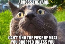 Cats / Funny