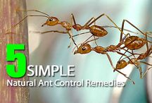 Natural Pest Control / by Alicia Pettit