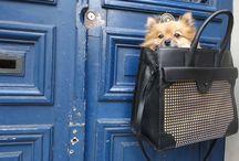 Dog Fashion :)    ...Jeanne