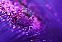 all things purple / by Paula Teague