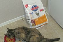 My Cats and Hill's Nutrition / As regular readers of my cat blog know, Elvira and Mr. Nikita are long time munchers of Science Diet cat foods, from Hill's Pet Nutrition: He used to eat the adult, mature and senior dry foods, as the years went by and more recently, for medical reasons, the prescription J/D, then A/D dry and wet.  Elvira has always had a thing for the adult light dry, as a way to keep her girlish figure. They have also long been fans of their treats. / by Kiril Kundurazieff