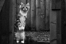 Gatti e felini - Cats and felines