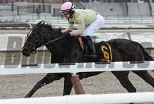Condo Commando / Condo Commando / by Blood-Horse
