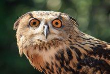 Wildlife / Wildlife photography, Bird photography