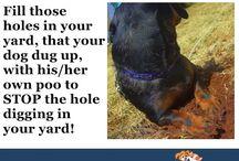 Animals...Tips