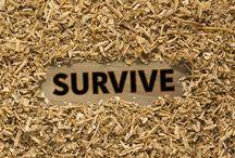 Survival RDCo.