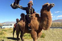 Moodboard mongolia