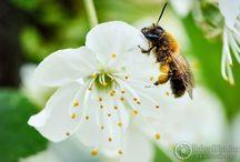 Fotografia zbliżeniowa i makrofotografia / Klika kadrów z fotografii kwiatów, owadów i innych zbliżeń