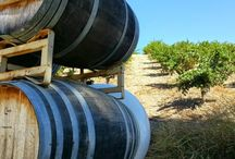 Top Paso Robles Wineries