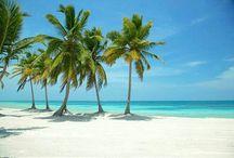 Palmen Sand  und Meer ⛵