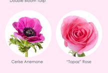 virágfajták